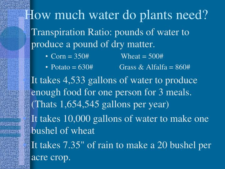 How much water do plants need?