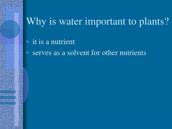 Why is water important to plants?