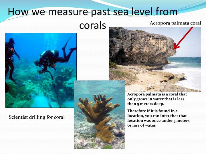 How we measure past sea level from corals