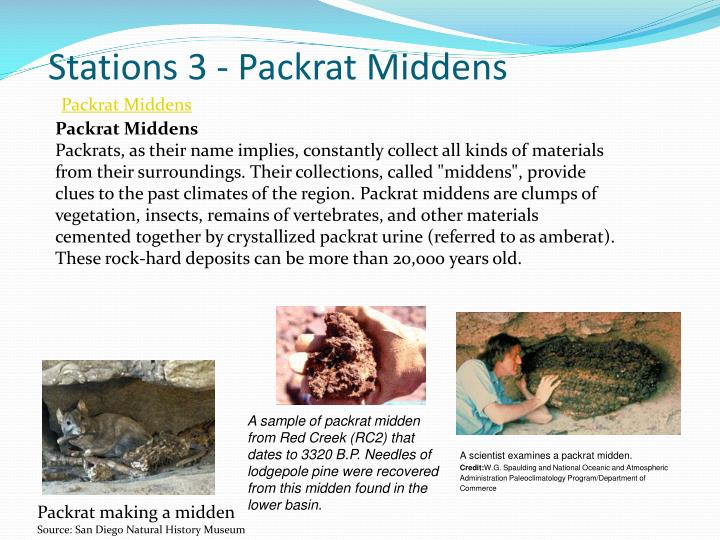 Stations 3 - Packrat