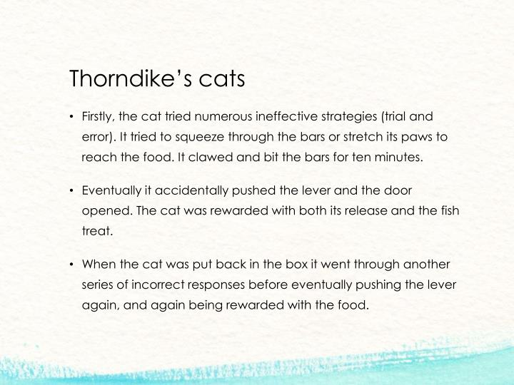 Thorndike's cats