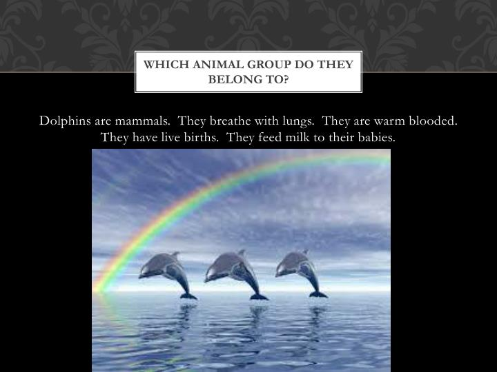 Which animal group do they belong to?