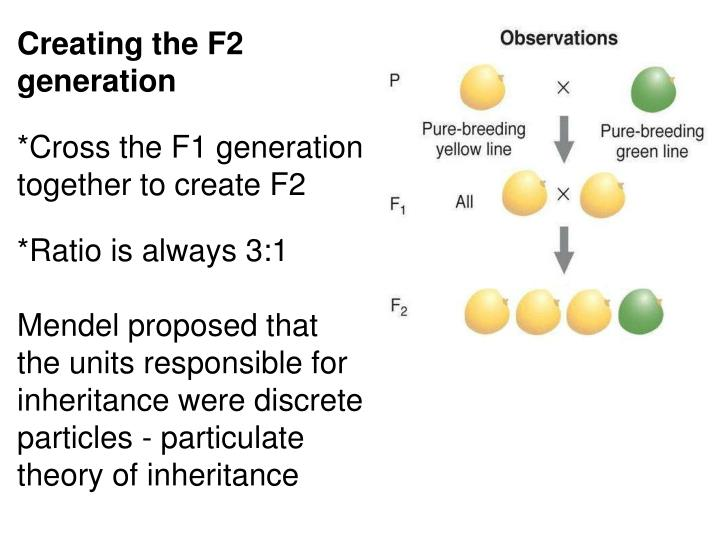 Creating the F2 generation