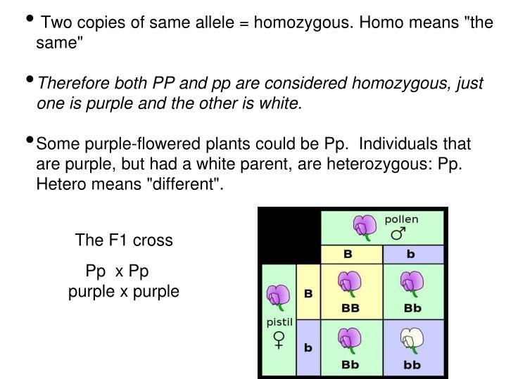 "Two copies of same allele = homozygous. Homo means ""the same"""