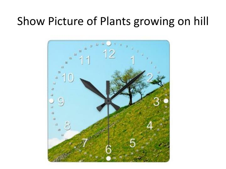 Show Picture of Plants growing on hill