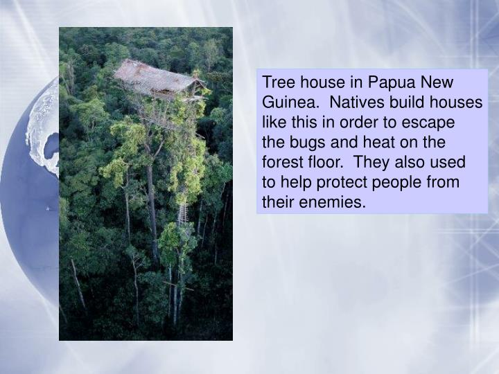Tree house in Papua New