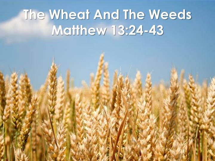 The Wheat And The Weeds
