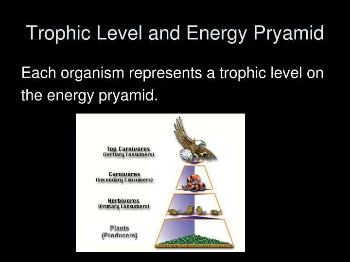 Trophic Level and Energy Pryamid