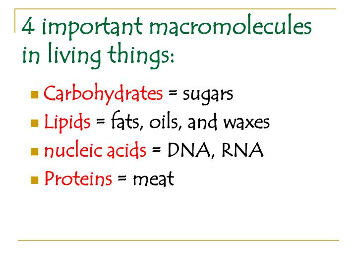 4 important macromolecules in living things:
