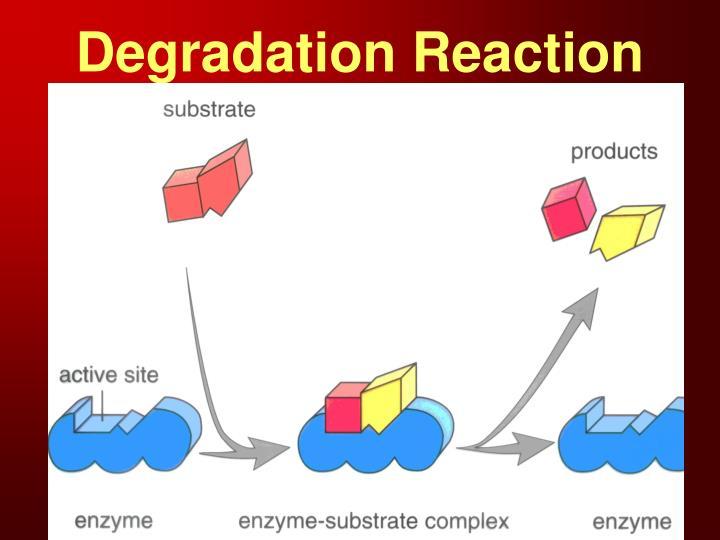 Degradation Reaction