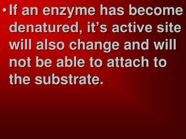 If an enzyme has become denatured, it's active site will also change and will not be able to attach to the substrate.