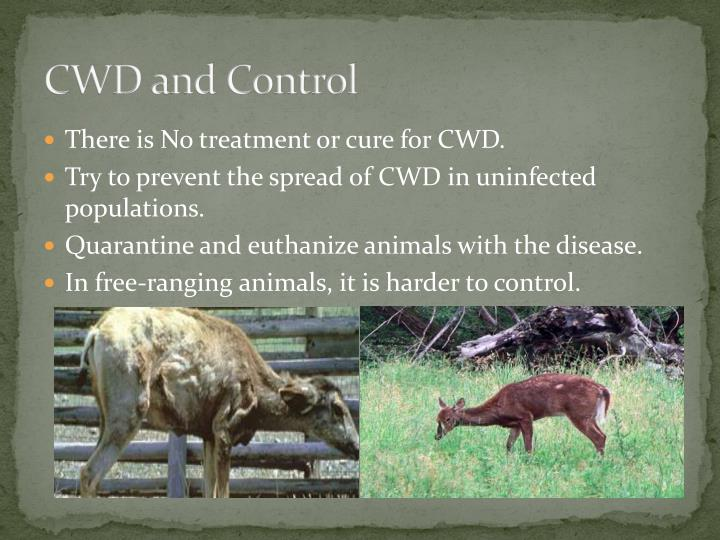CWD and Control