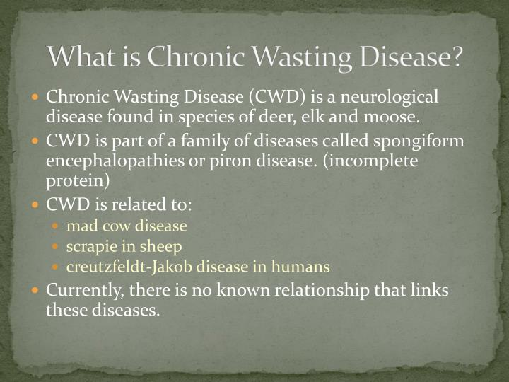 What is chronic wasting disease