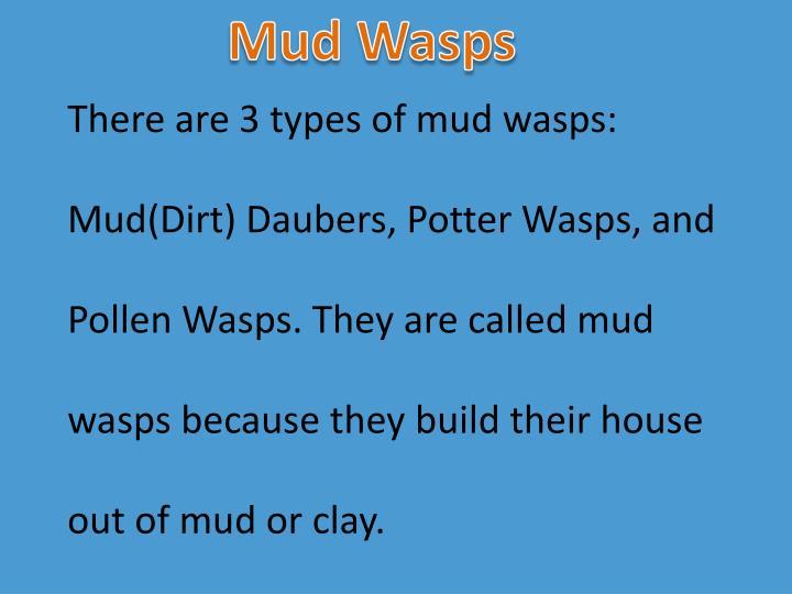 Mud Wasps