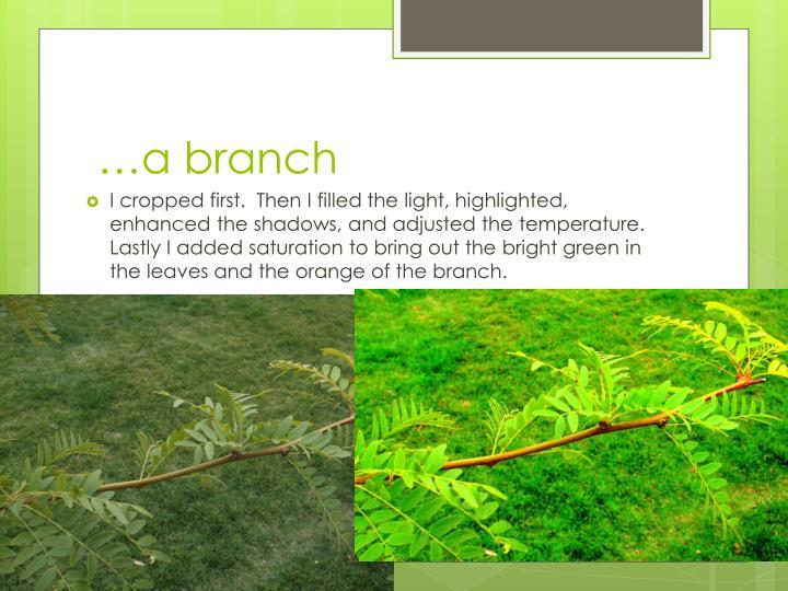 …a branch