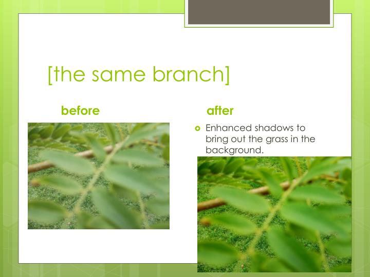 [the same branch]