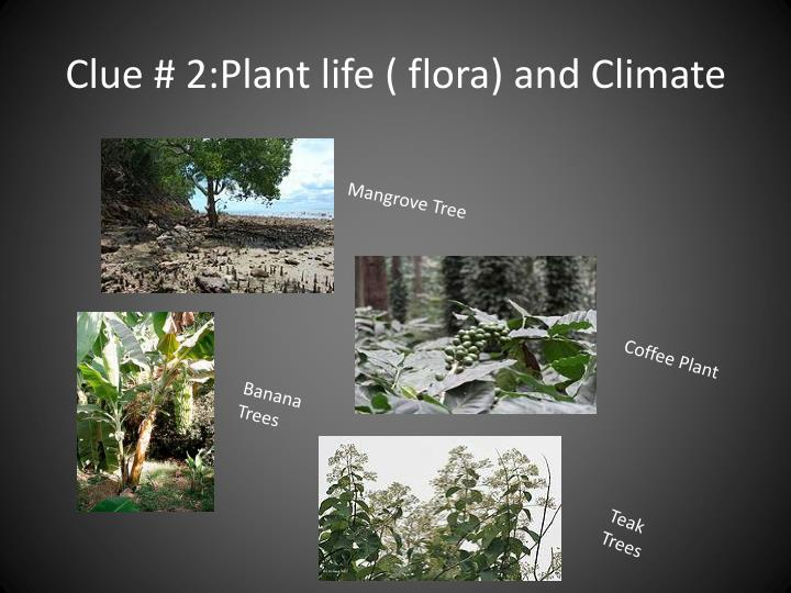 Clue # 2:Plant life ( flora) and Climate
