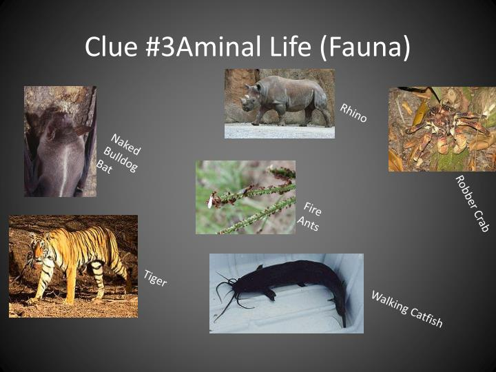 Clue #3Aminal Life (Fauna)