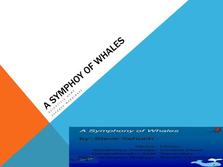 A Symphoy of whales