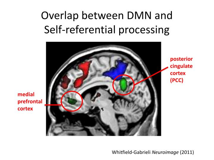 Overlap between DMN and