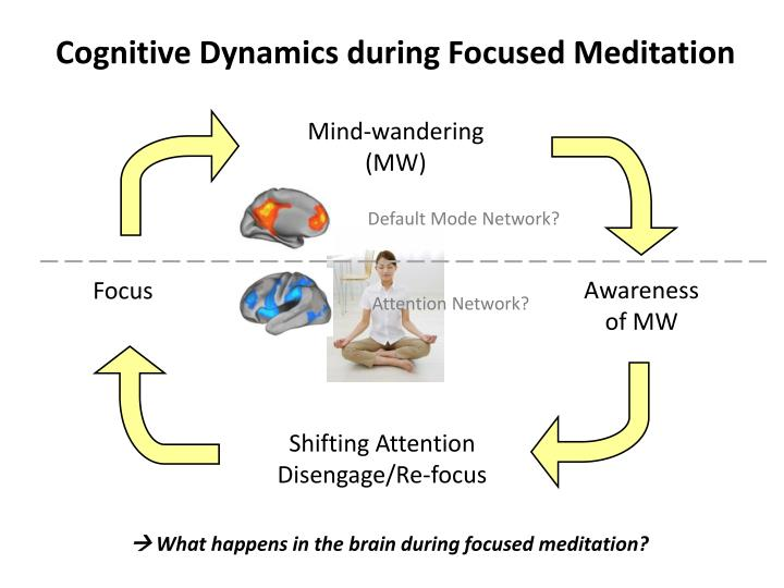 Cognitive Dynamics during Focused Meditation