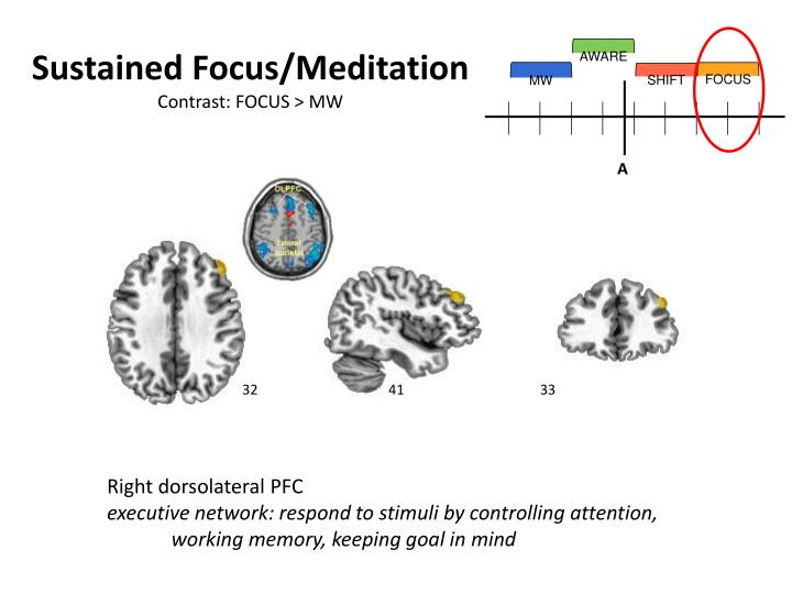 Sustained Focus/Meditation