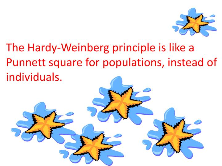 The Hardy-Weinberg principle is like a Punnett square for populations, instead of individuals.
