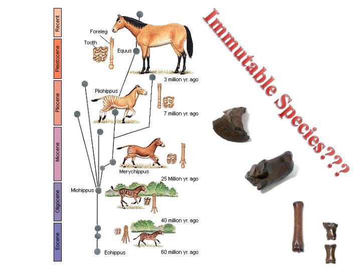 Immutable Species???