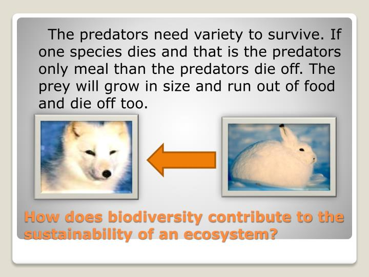 The predators need variety to survive. If one species dies and that is the predators only meal than the predators die off. The prey will grow in size and run out of food and die off too.