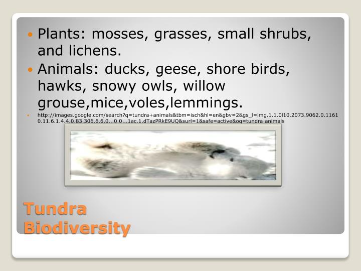 Plants: mosses, grasses, small shrubs, and lichens.