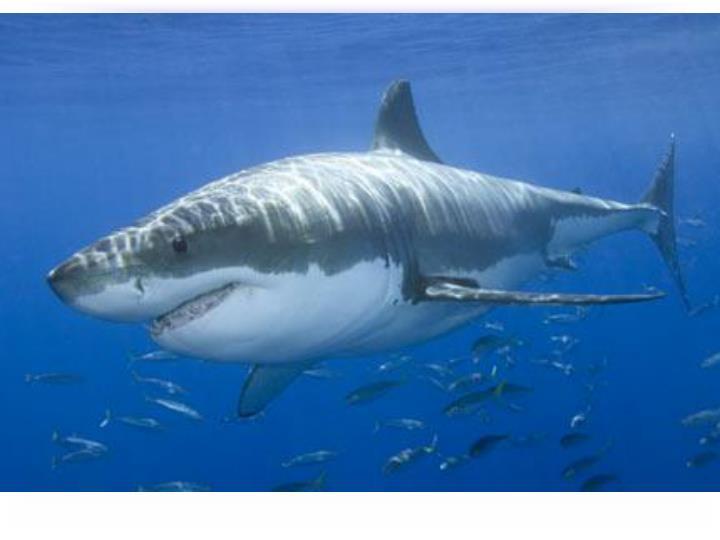 Aquatic Predators detect Electric Fields