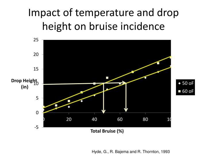 Impact of temperature and drop height on bruise incidence