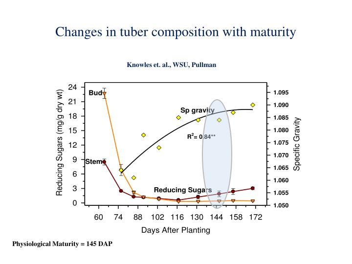 Changes in tuber composition with maturity