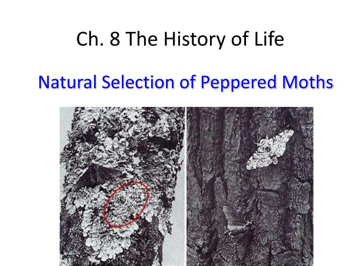 Natural Selection of Peppered Moths