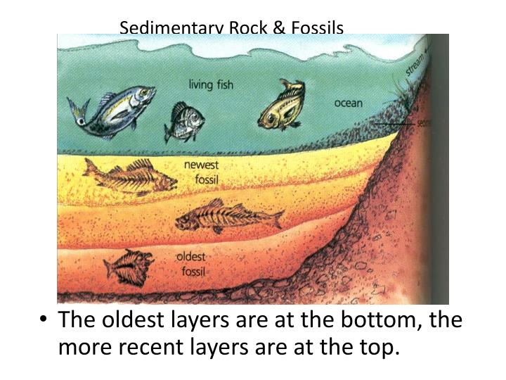 Sedimentary Rock & Fossils