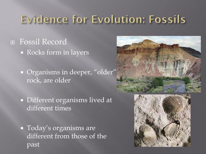 Evidence for Evolution: Fossils