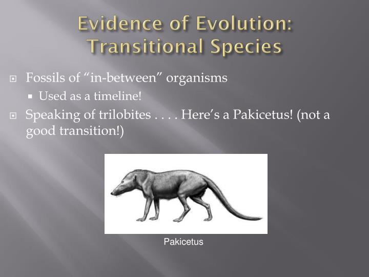 Evidence of Evolution: Transitional Species