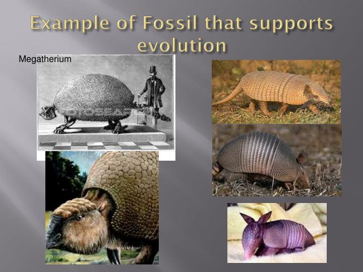 Example of Fossil that supports evolution