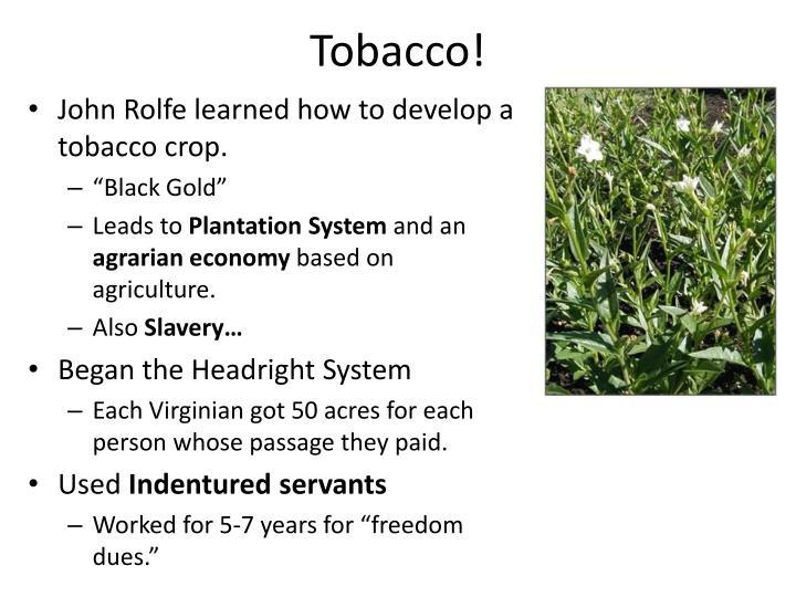 Tobacco!
