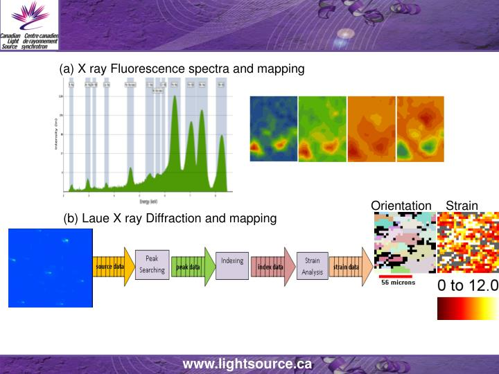 (a) X ray Fluorescence spectra and mapping