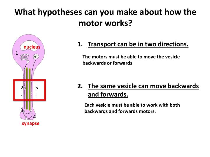 What hypotheses can you make about how the motor works?