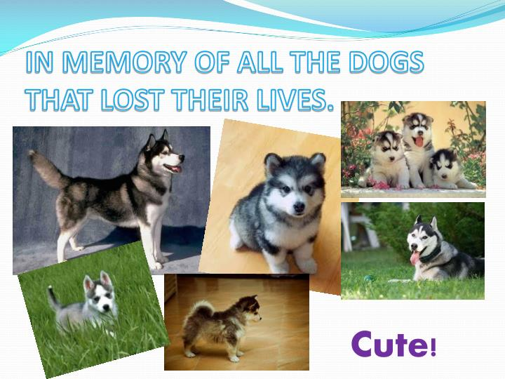 IN MEMORY OF ALL THE DOGS THAT LOST THEIR LIVES.