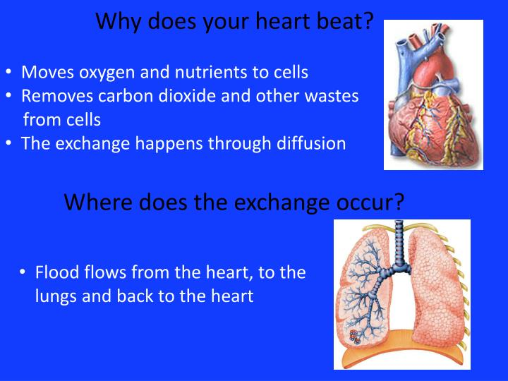 Why does your heart beat?