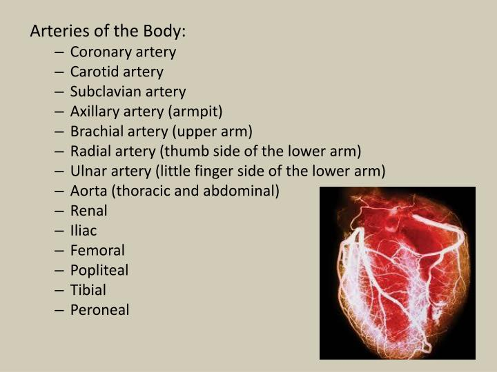 Arteries of the Body: