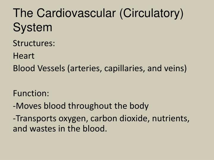 The Cardiovascular (Circulatory) System