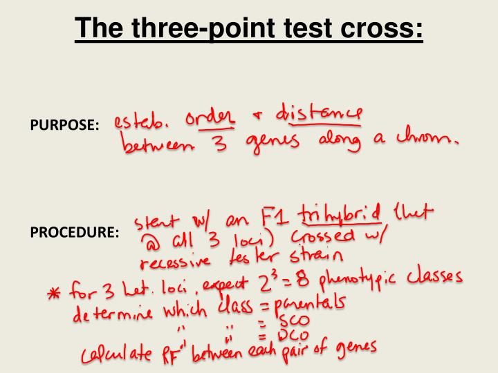 The three-point test cross: