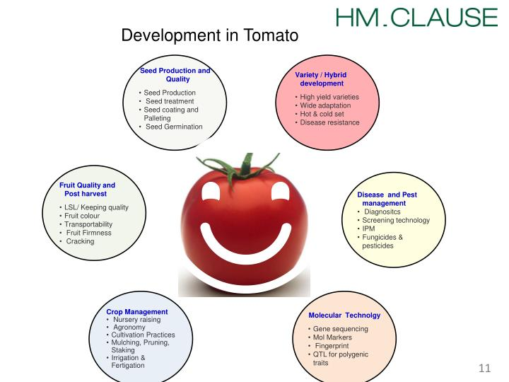 Development in Tomato
