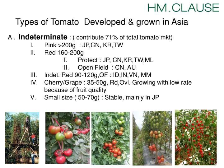 Types of Tomato  Developed &