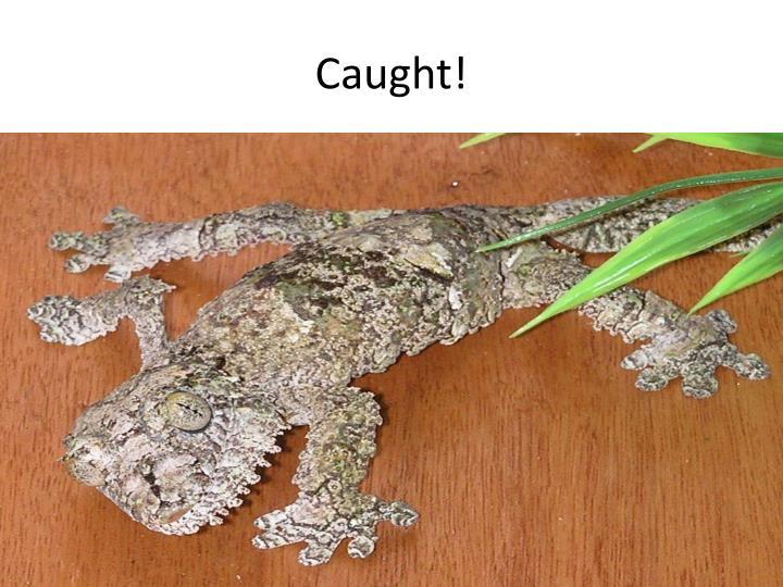 Caught!