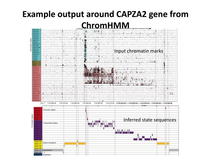 Example output around CAPZA2 gene from